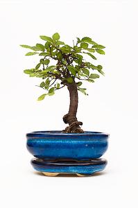 a tiny tree